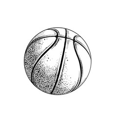 drawing basketball ball in black color vector image