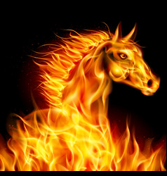 Head of horse in fire on black background vector