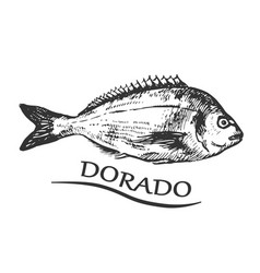 bream vector image