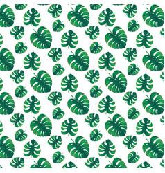 Green monstera leaves vector