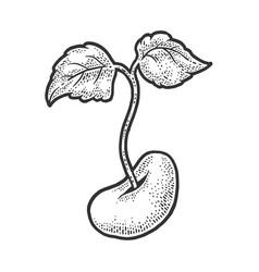Bean sprout sketch vector