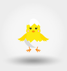 Chick in eggshell icon flat vector