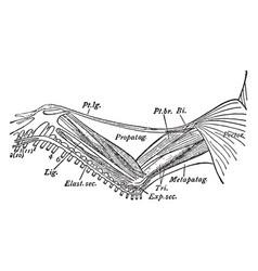 Goose wing vintage vector