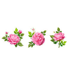 lovely rose flower vector image