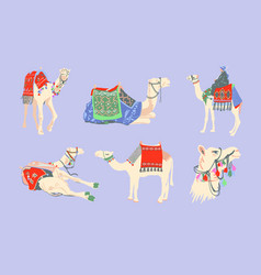 set egyptian camel decorated with bright vector image