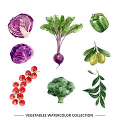 Set isolated watercolor vegetable vector