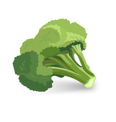 broccoli green plant isolated vector image