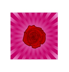 rose backround vector image vector image