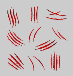 Bleeding scratches monster animal claws torn vector