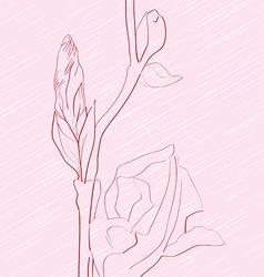 Iris fragment vector