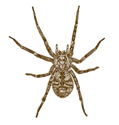 engraving big spider vector image vector image