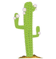 Cactus design vector