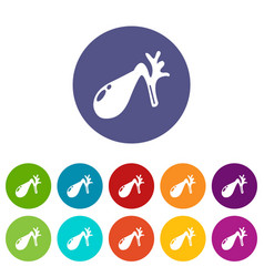 gallbladder icons set color vector image