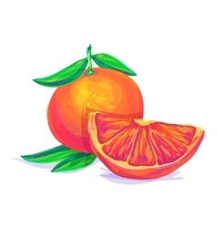Grapefruit hand drawn on a white background vector