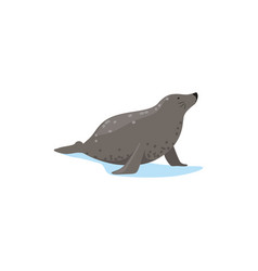 Harbor seal arctic fauna species vector