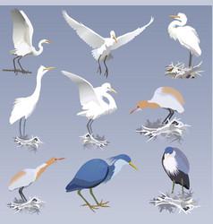 Herons vector