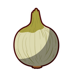 Light colors of onion in closeup with thick vector