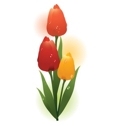 colorful tulips vector image vector image