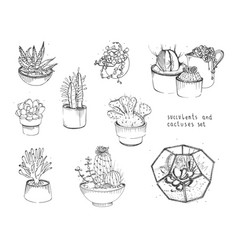 cactus and succulents set collection plants vector image