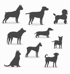dogs icons set different breeds vector image