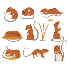 field mouse collection cute red rodent animal vector image