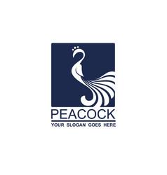 peacock bird icon vector image