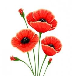 Red poppy flowers vector