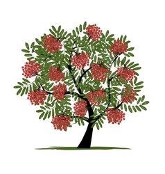 Rowan tree with berries for your design vector