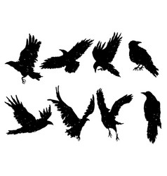 set ravens a collection black crows vector image