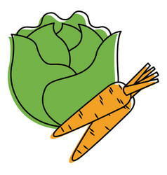lettuce and carrots vegetables fresh food vector image