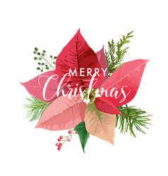 Christmas winter poinsettia flower card vector