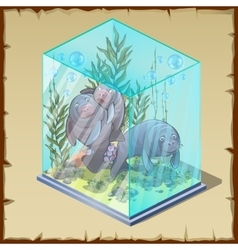 Family fur seals captivity frozen in a cube of ice vector