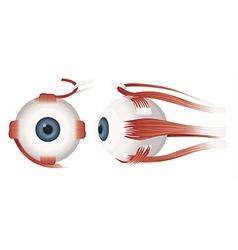 Human eye profiles vector