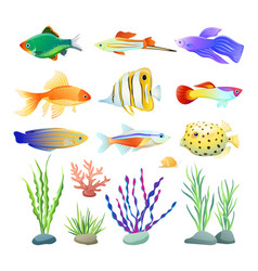 Marine creatures and seaweed on white vector