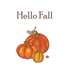 Autumn Pumpkin harvest vector