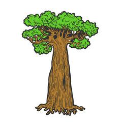 Baobab monkey bread tree color sketch engraving vector