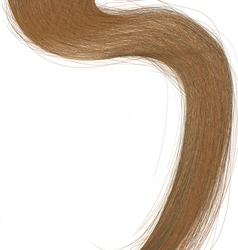 Long hair vector