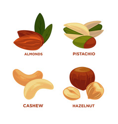 nut set ripe nuts and seeds vector image