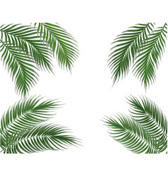 Tropical green palm leaves on four sides set vector