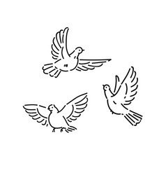 urban birds wild pigeons flying line art style vector image