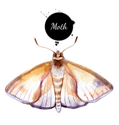 watercolor moth butterfly painted isolated vector image
