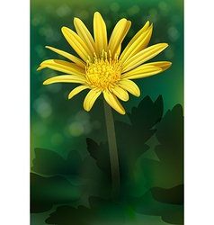 A blooming flower vector image vector image