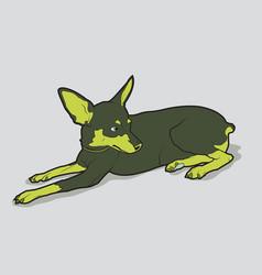 cute dog of breed chihuahua vector image vector image
