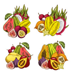 exotic fruit bundle sketch of tropical product vector image