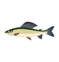 Grayling salmon thymallus fish vector