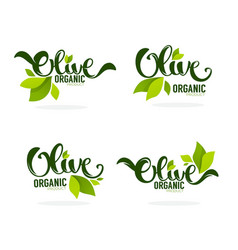 Green olive leaves and lettering compositions vector