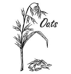 Oats sketch hand drawn oatmeal oat grain vector