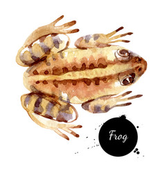Watercolor witch potion frog painted isolated vector