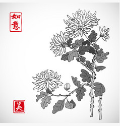 chrysanthemum flowers in oriental style on white vector image