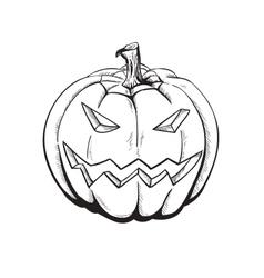 Sketch Pumpkin vector image